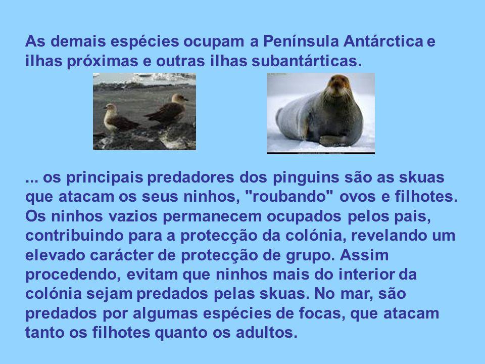 As demais espécies ocupam a Península Antárctica e ilhas próximas e outras ilhas subantárticas.... os principais predadores dos pinguins são as skuas