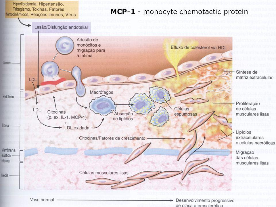 MCP-1 - monocyte chemotactic protein