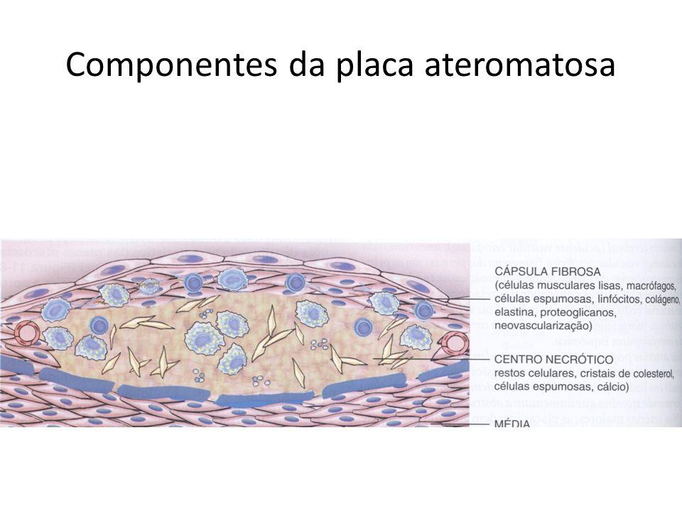 Componentes da placa ateromatosa
