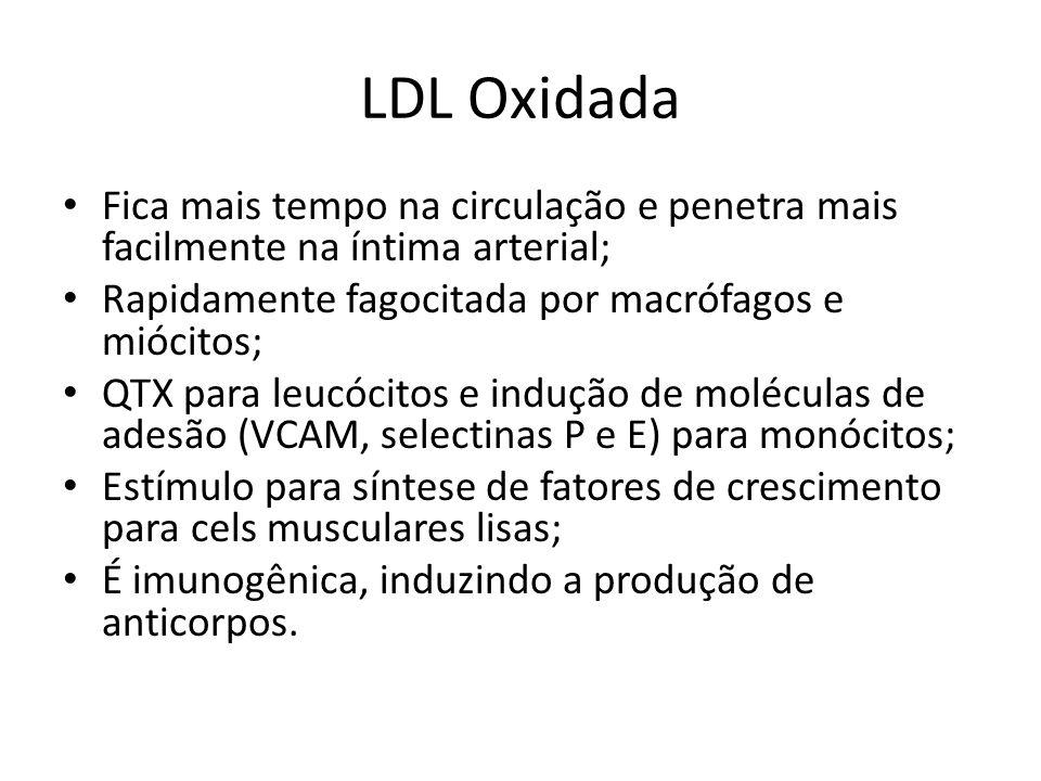 LDL Oxidada Fica mais tempo na circulação e penetra mais facilmente na íntima arterial; Rapidamente fagocitada por macrófagos e miócitos; QTX para leucócitos e indução de moléculas de adesão (VCAM, selectinas P e E) para monócitos; Estímulo para síntese de fatores de crescimento para cels musculares lisas; É imunogênica, induzindo a produção de anticorpos.