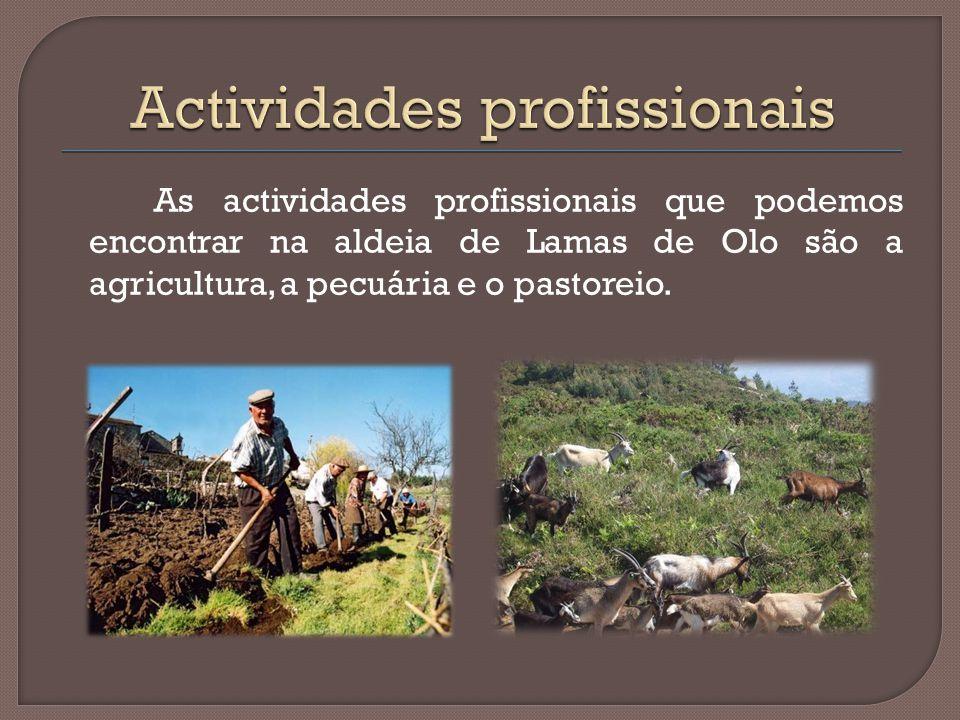 As actividades profissionais que podemos encontrar na aldeia de Lamas de Olo são a agricultura, a pecuária e o pastoreio.