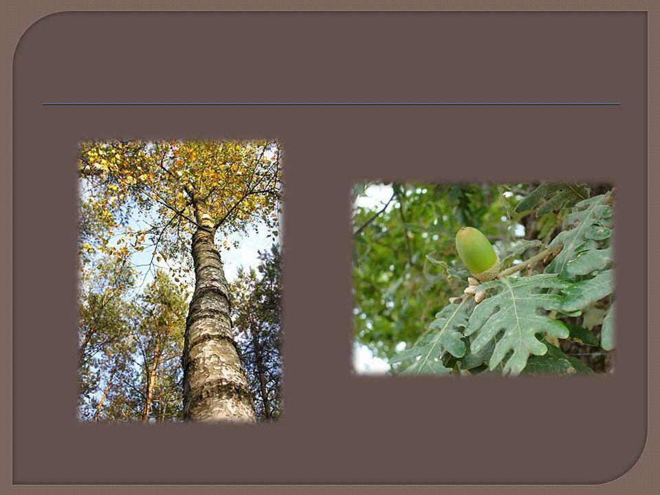 7- Segundo os seus conhecimentos, quais os usos que os habitantes da aldeia de Lamas de Olo fazem dos produtos florestais.