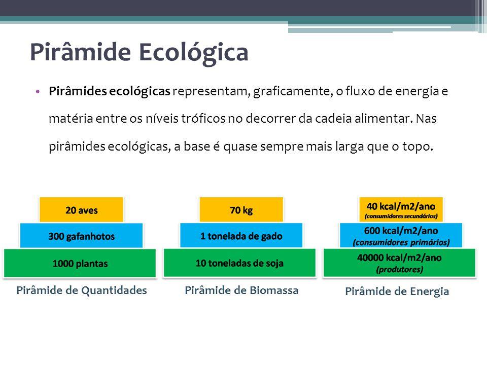 Pirâmides ecológicas representam, graficamente, o fluxo de energia e matéria entre os níveis tróficos no decorrer da cadeia alimentar.