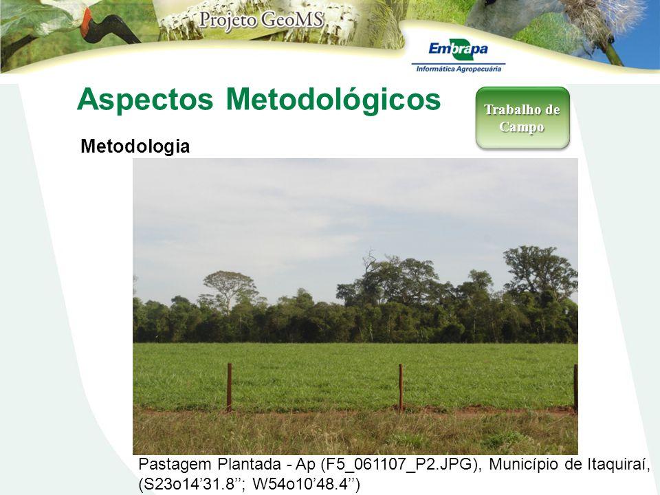Aspectos Metodológicos Metodologia Trabalho de Campo Pastagem Plantada - Ap (F5_061107_P2.JPG), Município de Itaquiraí, (S23o1431.8; W54o1048.4)