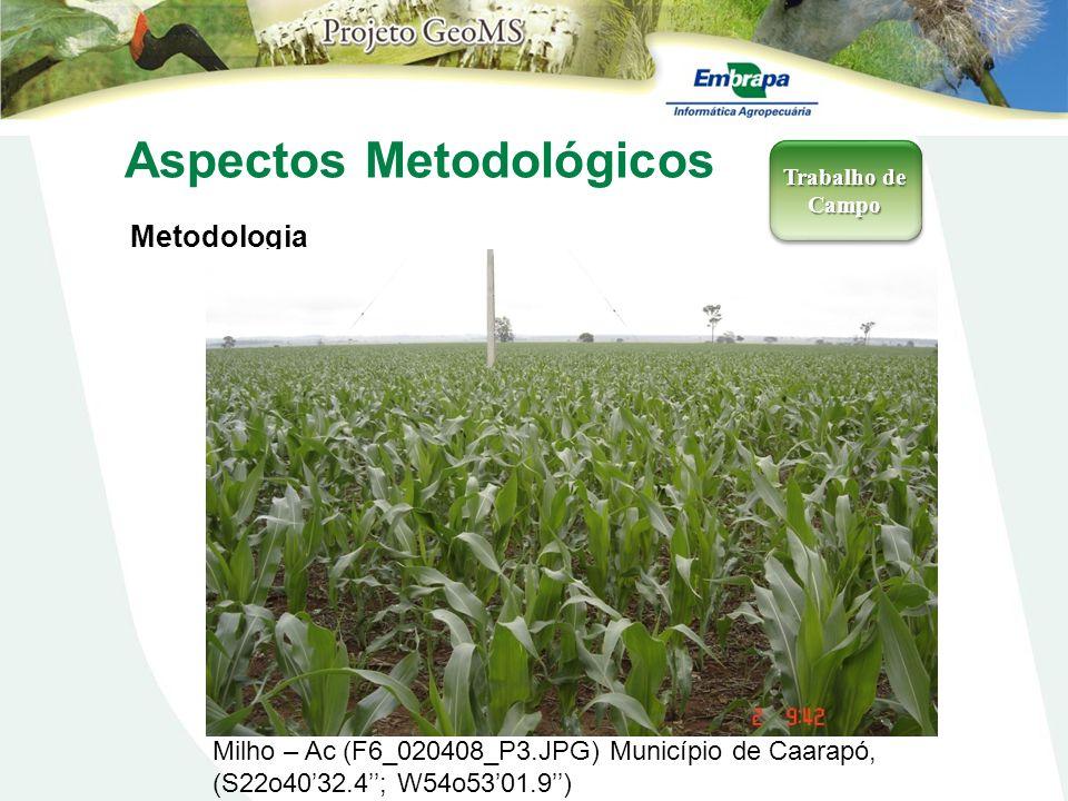 Aspectos Metodológicos Metodologia Trabalho de Campo Milho – Ac (F6_020408_P3.JPG) Município de Caarapó, (S22o4032.4; W54o5301.9)