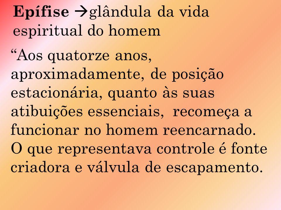 Epífise glândula da vida espiritual do homem Aos quatorze anos, aproximadamente, de posição estacionária, quanto às suas atibuições essenciais, recomeça a funcionar no homem reencarnado.