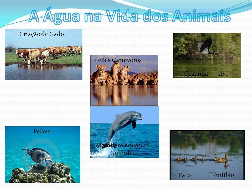 Peixes Criação de Gado Leões Carnívoros Mamífero Aquático Golfinho Cegonha Ave Pato Anfíbio