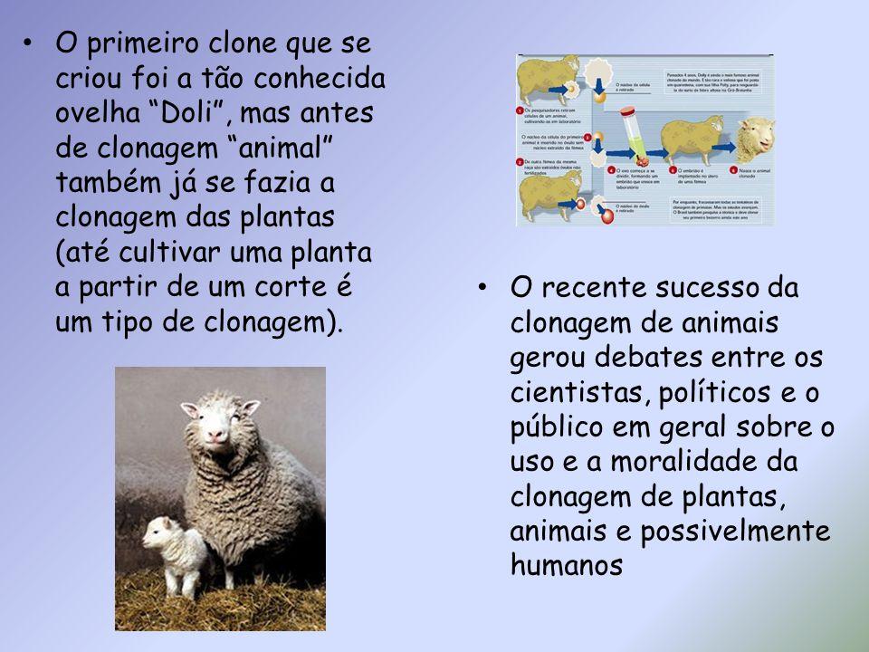 O primeiro clone que se criou foi a tão conhecida ovelha Doli, mas antes de clonagem animal também já se fazia a clonagem das plantas (até cultivar um