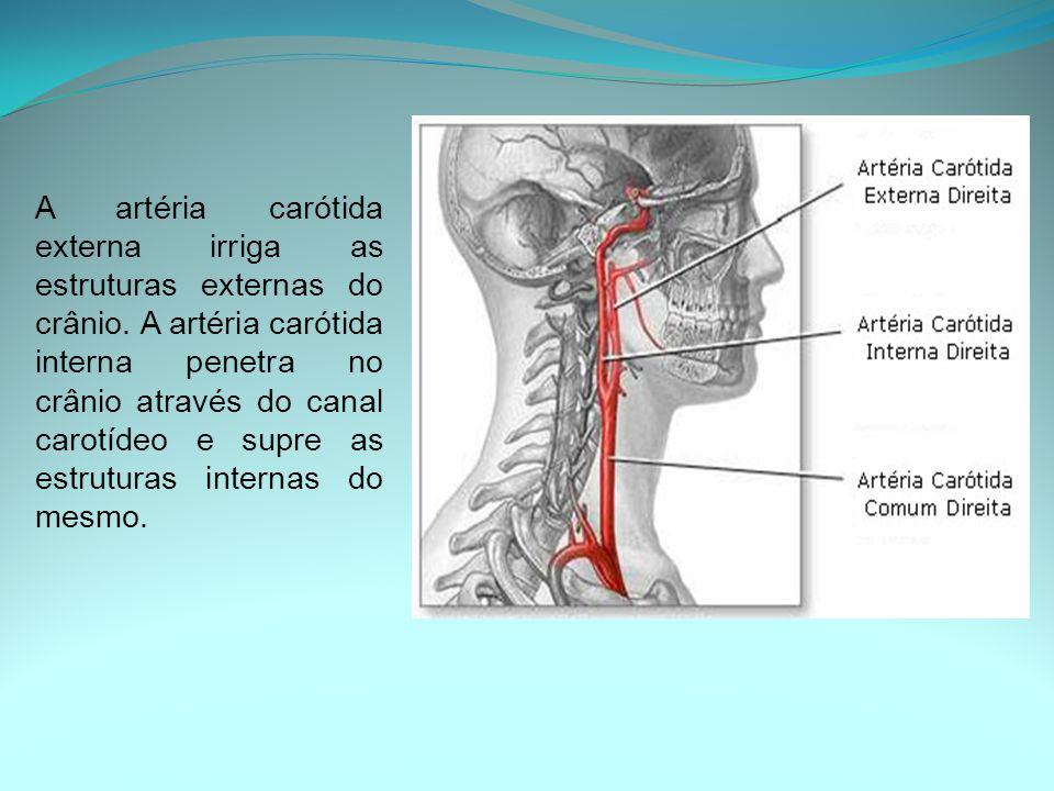 A artéria carótida externa irriga as estruturas externas do crânio. A artéria carótida interna penetra no crânio através do canal carotídeo e supre as