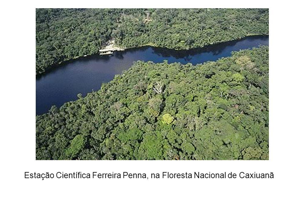 Estação Científica Ferreira Penna, na Floresta Nacional de Caxiuanã