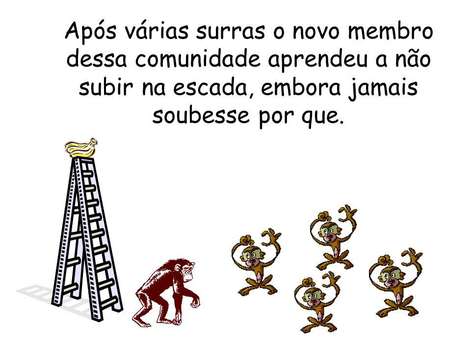 Os cientistas decidiram então substituir um dos macacos. A primeira coisa que o macaco novo fez foi tentar subir na escada. Imediatamente os demais co