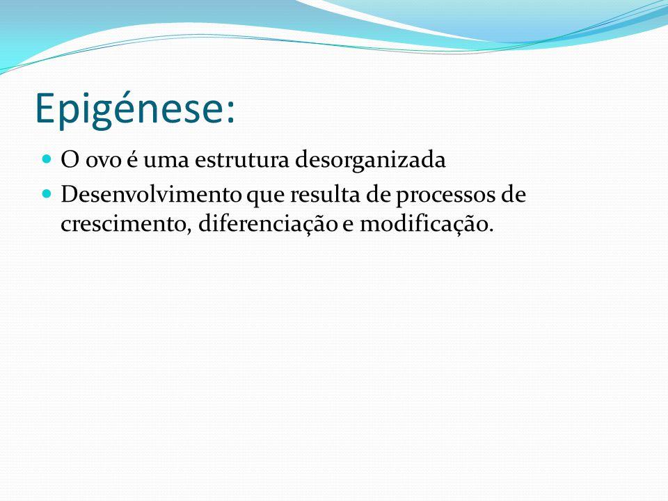 Epigénese: O ovo é uma estrutura desorganizada Desenvolvimento que resulta de processos de crescimento, diferenciação e modificação.