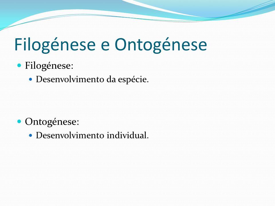 Filogénese e Ontogénese Filogénese: Desenvolvimento da espécie. Ontogénese: Desenvolvimento individual.