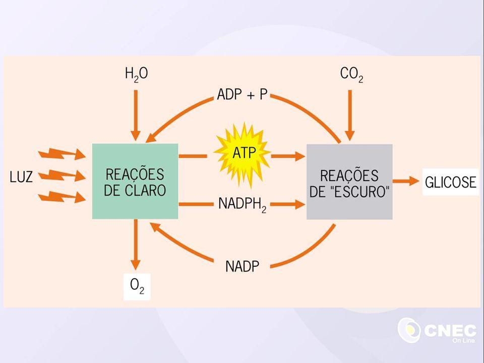 Concentração de CO 2 Fatores que interferem na fotossíntese