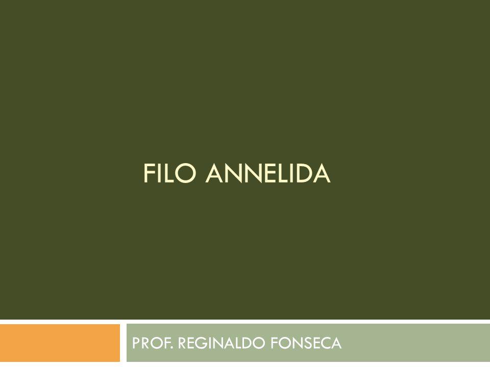 FILO ANNELIDA PROF. REGINALDO FONSECA