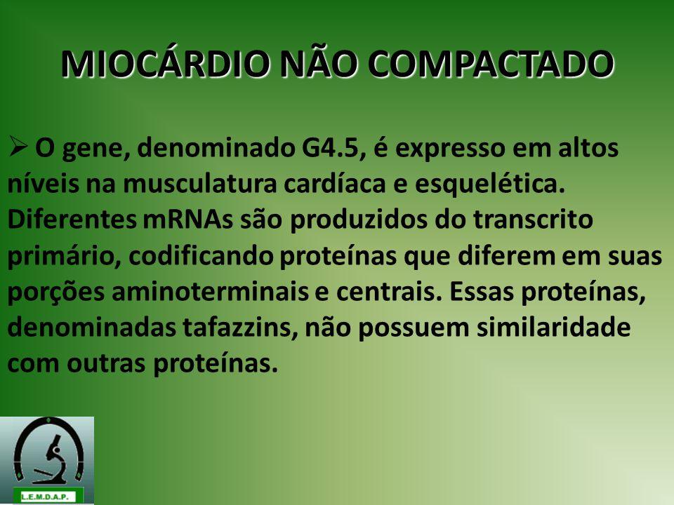 MIOCÁRDIO NÃO COMPACTADO O gene, denominado G4.5, é expresso em altos níveis na musculatura cardíaca e esquelética. Diferentes mRNAs são produzidos do