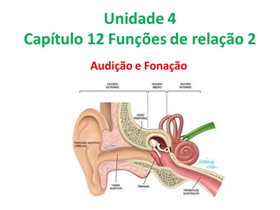 Unidade 4 Capítulo 12 Funções de relação 2 Audição e Fonação