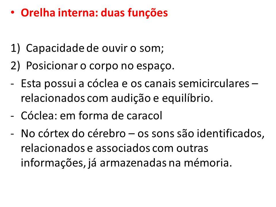Orelha interna: duas funções 1)Capacidade de ouvir o som; 2)Posicionar o corpo no espaço. -Esta possui a cóclea e os canais semicirculares – relaciona