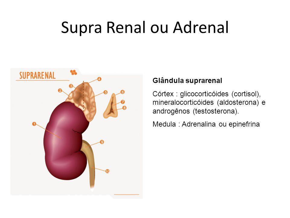 Supra Renal ou Adrenal Glândula suprarenal Córtex : glicocorticóides (cortisol), mineralocorticóides (aldosterona) e androgênos (testosterona). Medula