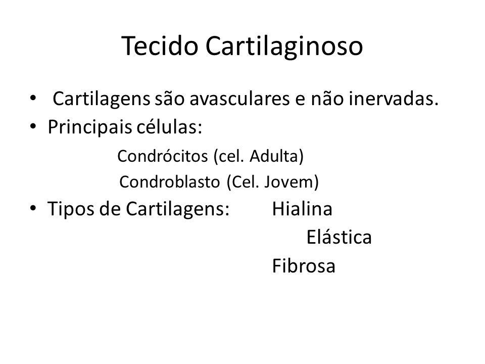 Tecido Cartilaginoso Cartilagens são avasculares e não inervadas. Principais células: Condrócitos (cel. Adulta) Condroblasto (Cel. Jovem) Tipos de Car