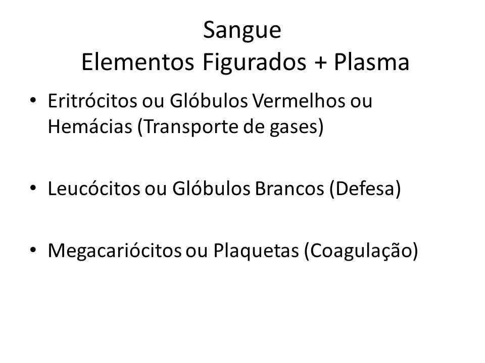 Sangue Elementos Figurados + Plasma Eritrócitos ou Glóbulos Vermelhos ou Hemácias (Transporte de gases) Leucócitos ou Glóbulos Brancos (Defesa) Megaca