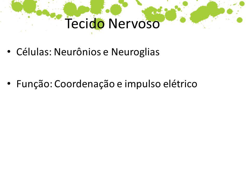 Tecido Nervoso Células: Neurônios e Neuroglias Função: Coordenação e impulso elétrico