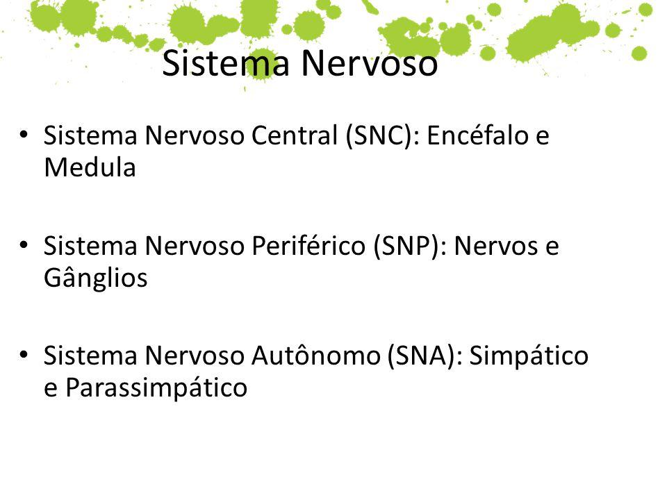 Sistema Nervoso Sistema Nervoso Central (SNC): Encéfalo e Medula Sistema Nervoso Periférico (SNP): Nervos e Gânglios Sistema Nervoso Autônomo (SNA): S
