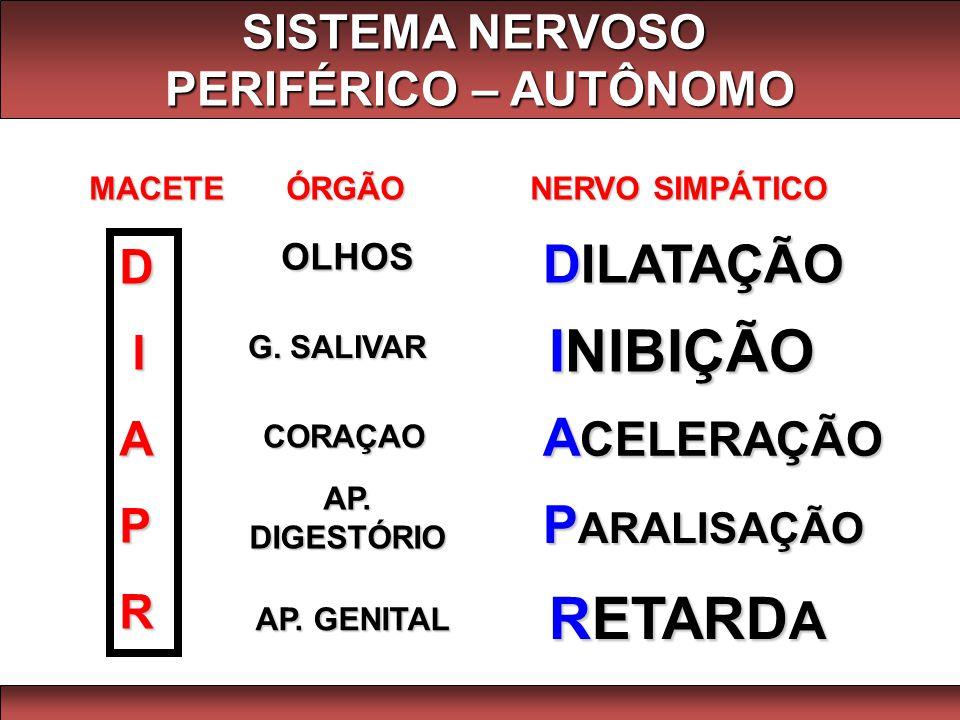 MACETE ÓRGÃO NERVO SIMPÁTICO D IAPR OLHOS G. SALIVAR CORAÇAO AP. DIGESTÓRIO AP. GENITAL DILATAÇÃO INIBIÇÃO A CELERAÇÃO P ARALISAÇÃO RETARD A SISTEMA N
