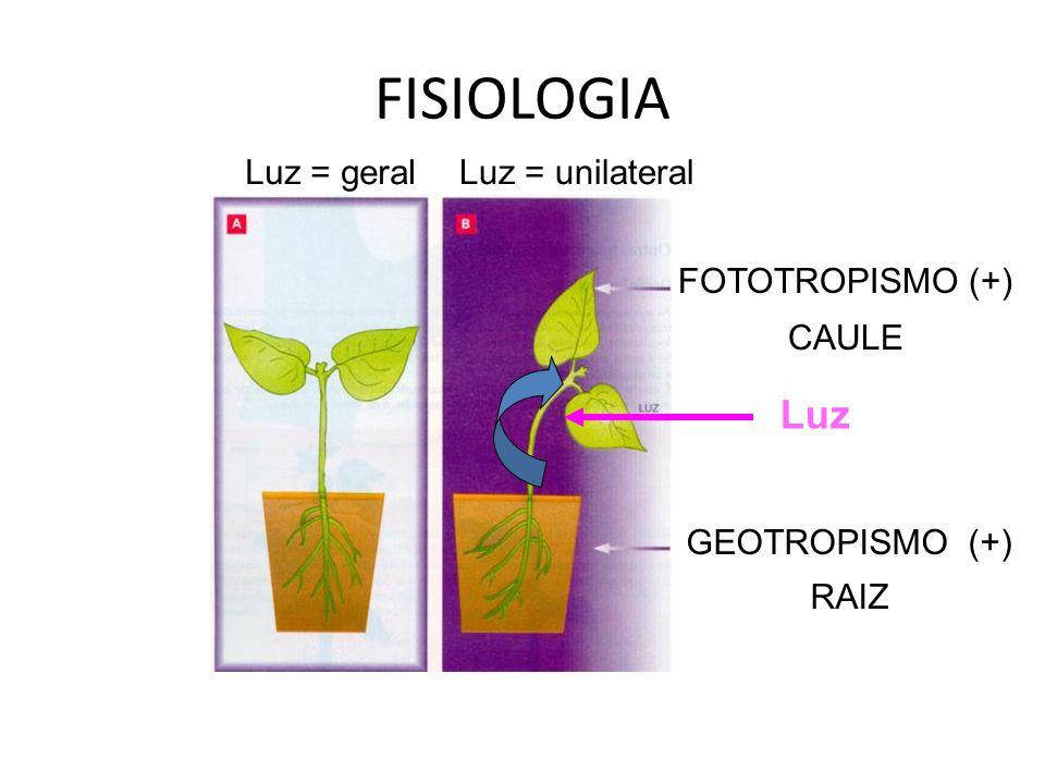 FISIOLOGIA Luz = geralLuz = unilateral Luz FOTOTROPISMO (+) CAULE GEOTROPISMO (+) RAIZ
