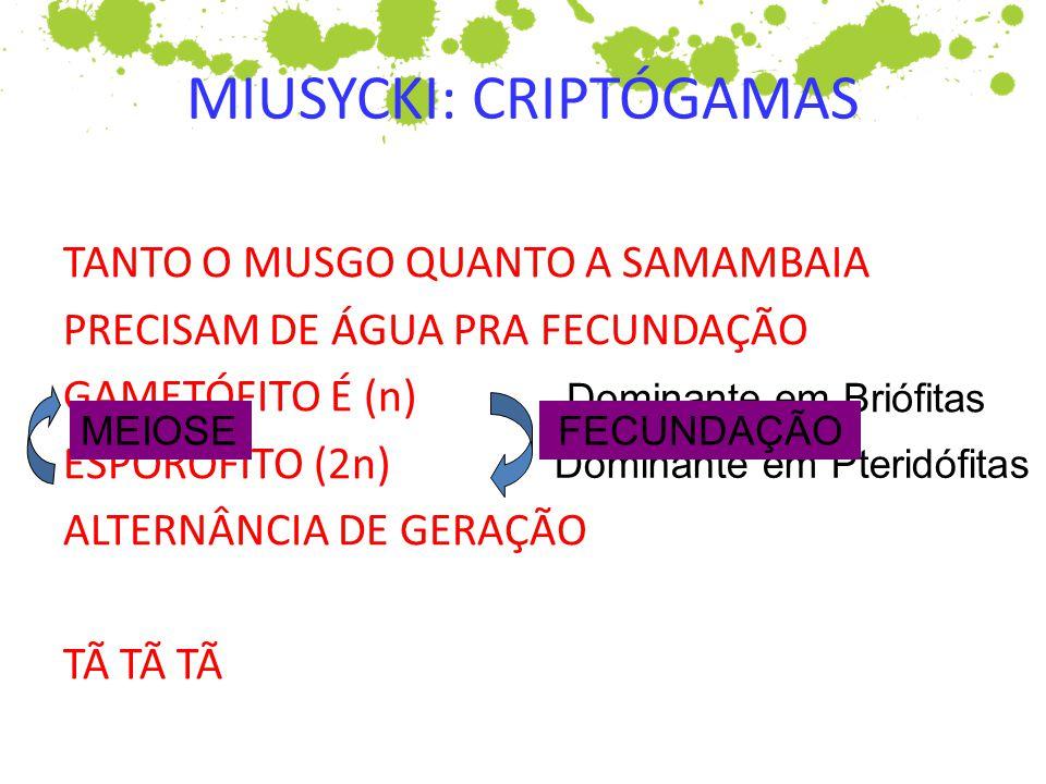 MIUSYCKI: CRIPTÓGAMAS TANTO O MUSGO QUANTO A SAMAMBAIA PRECISAM DE ÁGUA PRA FECUNDAÇÃO GAMETÓFITO É (n) ESPORÓFITO (2n) ALTERNÂNCIA DE GERAÇÃO TÃ TÃ T