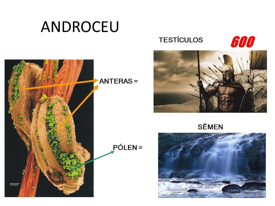 ANDROCEU ANTERAS = SÊMEN TESTÍCULOS PÓLEN = 600