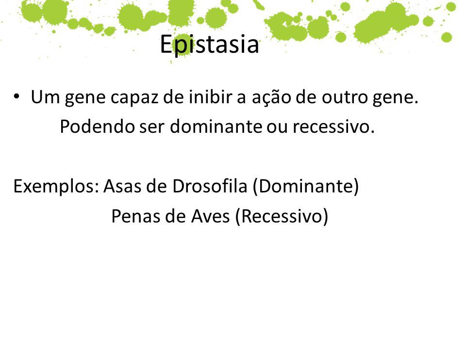 Epistasia Um gene capaz de inibir a ação de outro gene. Podendo ser dominante ou recessivo. Exemplos: Asas de Drosofila (Dominante) Penas de Aves (Rec