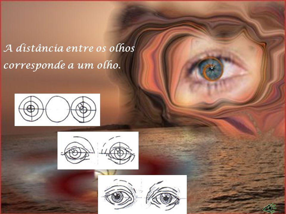 A distância entre os olhos corresponde a um olho.