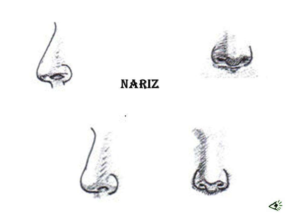 Nariz
