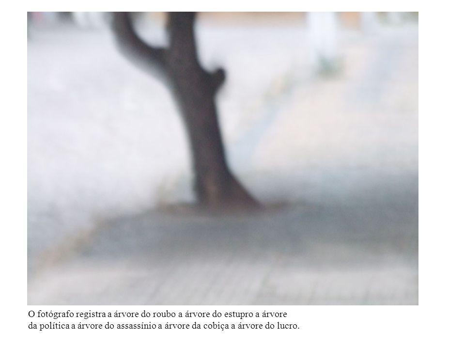 O fotógrafo registra a árvore do roubo a árvore do estupro a árvore da política a árvore do assassínio a árvore da cobiça a árvore do lucro.