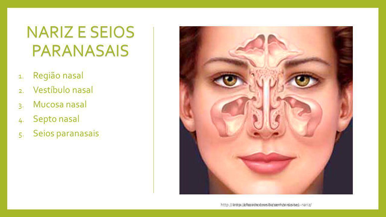 http://otorrinobrasilia.com/sinusite/ NARIZ E SEIOS PARANASAIS 1. Região nasal 2. Vestíbulo nasal 3. Mucosa nasal 4. Septo nasal 5. Seios paranasais h
