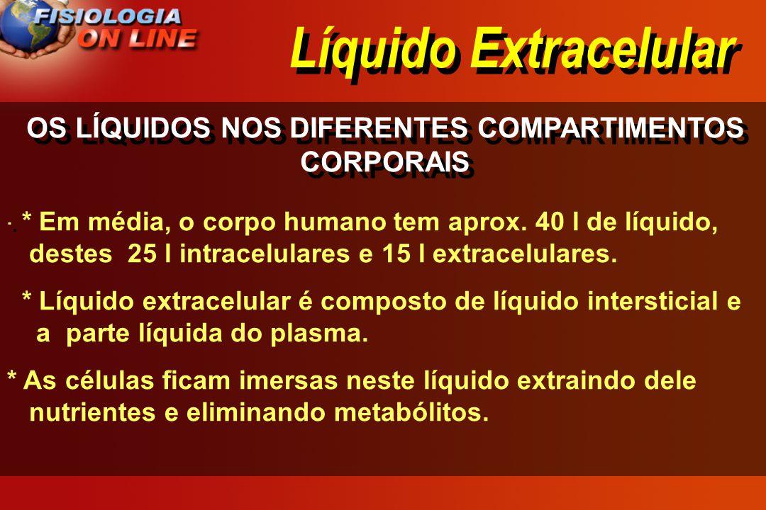 Líquido Extracelular OS LÍQUIDOS NOS DIFERENTES COMPARTIMENTOS CORPORAIS · · * Em média, o corpo humano tem aprox. 40 l de líquido, destes 25 l intrac