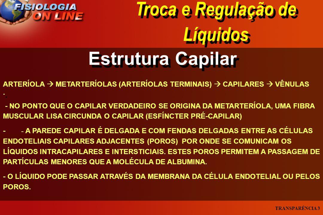 Troca e Regulação de Líquidos Estrutura Capilar · · ARTERÍOLA METARTERÍOLAS (ARTERÍOLAS TERMINAIS) CAPILARES VÊNULAS - NO PONTO QUE O CAPILAR VERDADEI