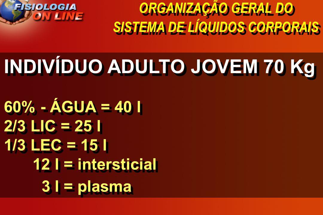ORGANIZAÇÃO GERAL DO SISTEMA DE LÍQUIDOS CORPORAIS INDIVÍDUO ADULTO JOVEM 70 Kg 60% - ÁGUA = 40 l 2/3 LIC = 25 l 1/3 LEC = 15 l 12 l = intersticial 3