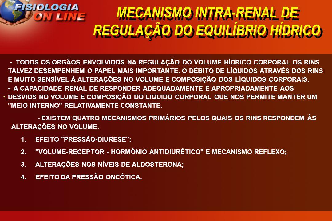 MECANISMO INTRA-RENAL DE REGULAÇÃO DO EQUILÍBRIO HÍDRICO · · - TODOS OS ORGÃOS ENVOLVIDOS NA REGULAÇÃO DO VOLUME HÍDRICO CORPORAL OS RINS TALVEZ DESEM