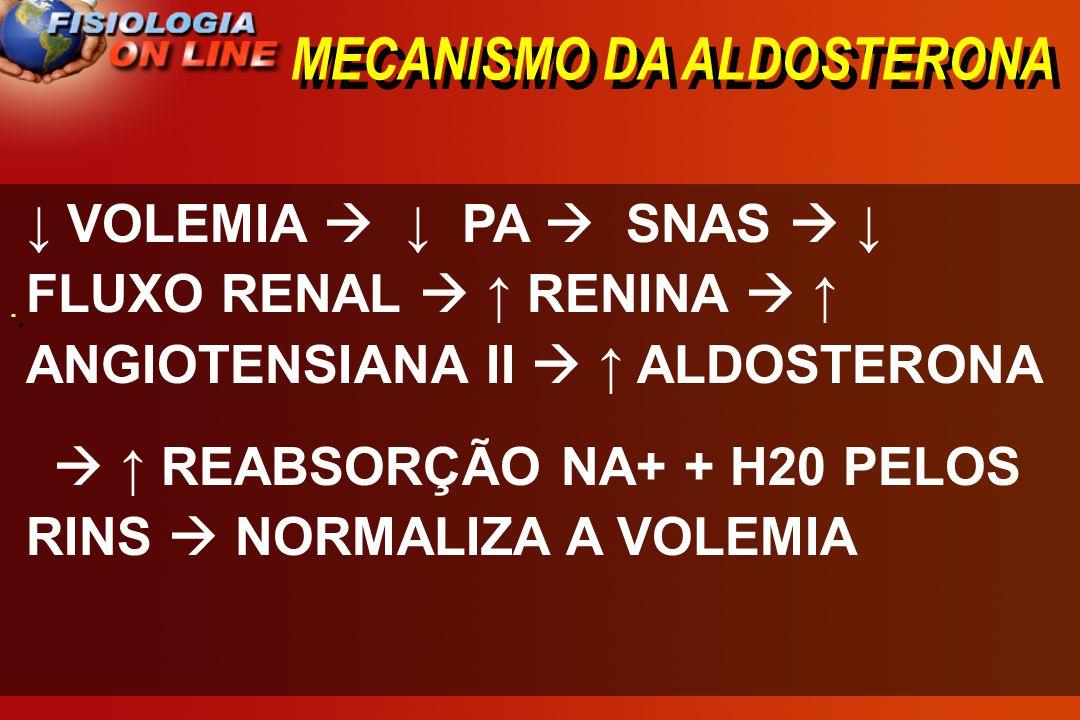 MECANISMO DA ALDOSTERONA · · VOLEMIA PA SNAS FLUXO RENAL RENINA ANGIOTENSIANA II ALDOSTERONA REABSORÇÃO NA+ + H20 PELOS RINS NORMALIZA A VOLEMIA