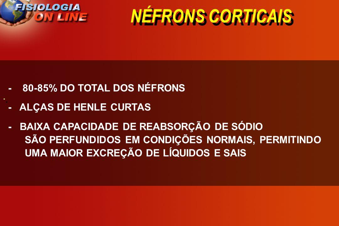 NÉFRONS CORTICAIS · · - 80-85% DO TOTAL DOS NÉFRONS - ALÇAS DE HENLE CURTAS - BAIXA CAPACIDADE DE REABSORÇÃO DE SÓDIO SÃO PERFUNDIDOS EM CONDIÇÕES NOR