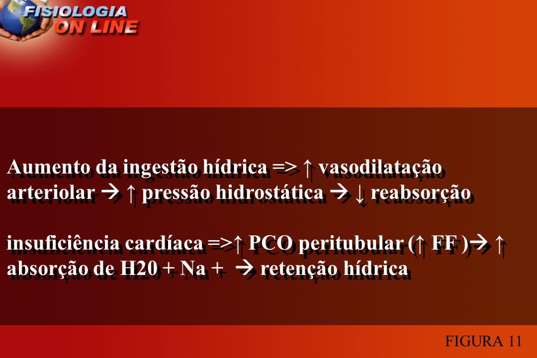 Aumento da ingestão hídrica => vasodilatação arteriolar pressão hidrostática reabsorção insuficiência cardíaca => PCO peritubular ( FF ) absorção de H