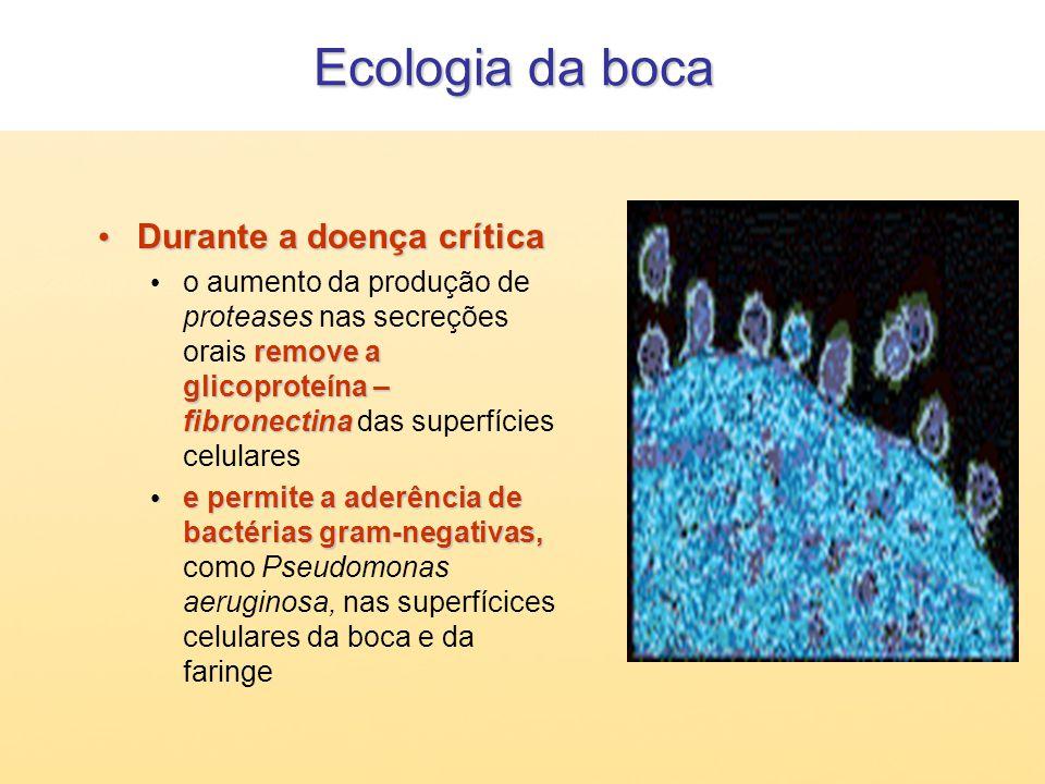 Ecologia da boca Durante a doença crítica Durante a doença crítica remove a glicoproteína – fibronectina o aumento da produção de proteases nas secreç