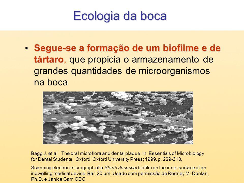 Segue-se a formação de um biofilme e de tártaro Segue-se a formação de um biofilme e de tártaro, que propicia o armazenamento de grandes quantidades d