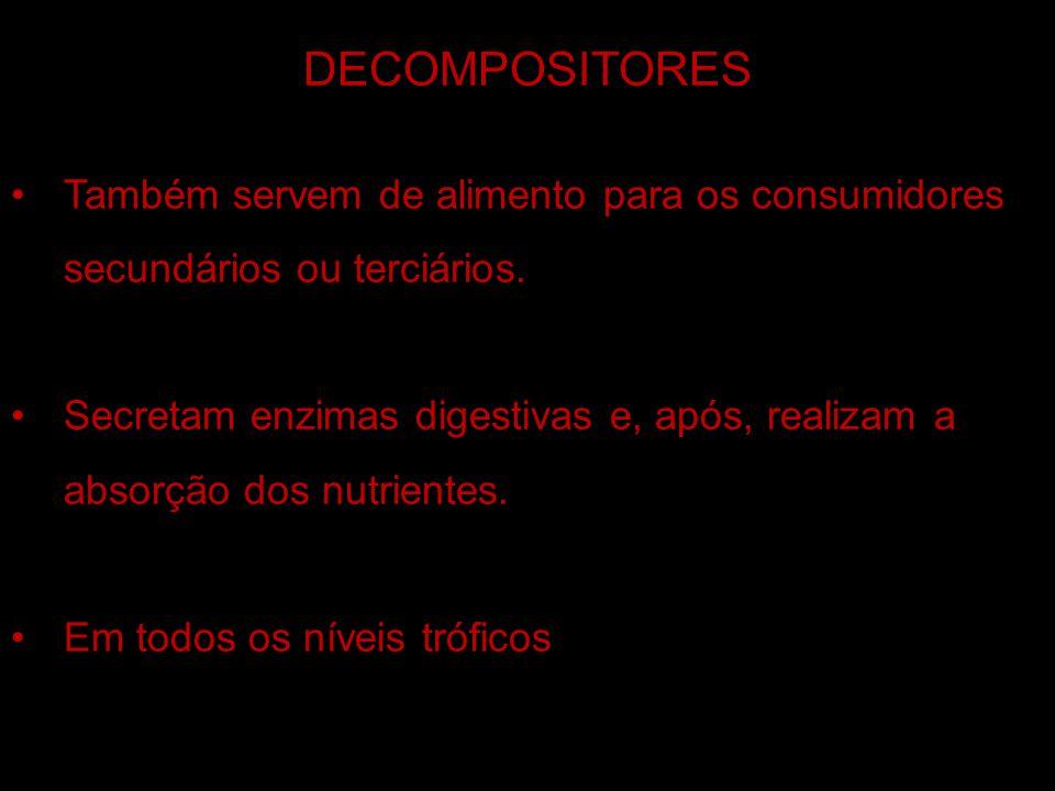 DECOMPOSITORES VÍDEO