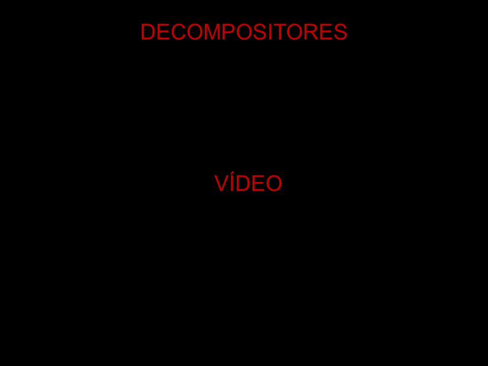 DECOMPOSITORES VÍDEO