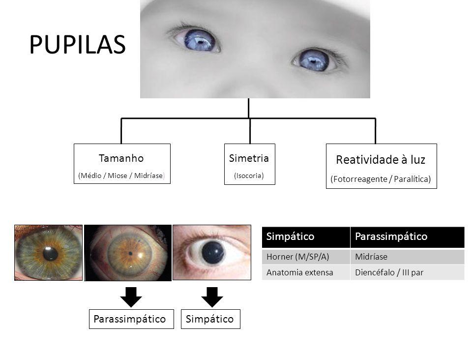 PUPILAS Simetria (Isocoria) Tamanho (Médio / Miose / Midríase) Reatividade à luz (Fotorreagente / Paralítica) SimpáticoParassimpático Horner (M/SP/A)Midríase Anatomia extensaDiencéfalo / III par ParassimpáticoSimpático
