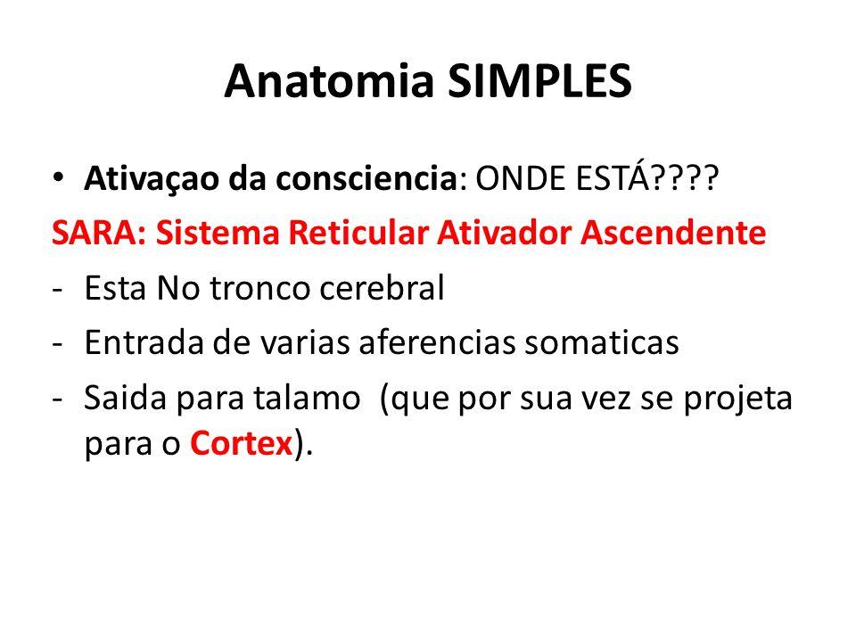 Anatomia SIMPLES Ativaçao da consciencia: ONDE ESTÁ???.