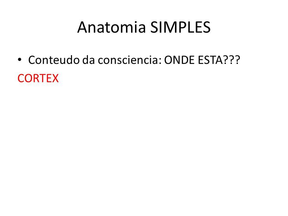 Anatomia SIMPLES Conteudo da consciencia: ONDE ESTA??? CORTEX